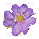 Scabious from foamIran